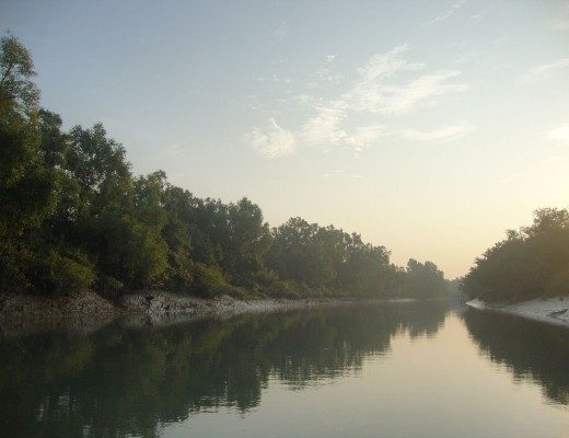 A_View_of_the_Largest_Mangrove_Forest_in_the_World